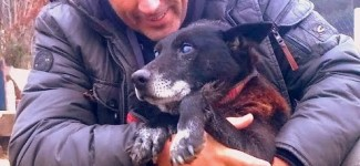 """Heroes Save """"Christmas"""" the Blind Dog from a Deep Well"""