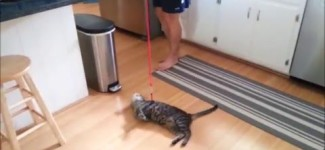 Funny Cats Compilation Walking on the Leash FAIL