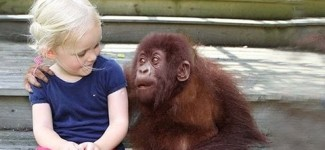Girl Meets Gorilla Old Friend After Many Years